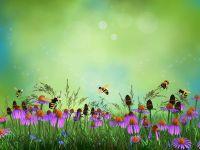 Бджілки