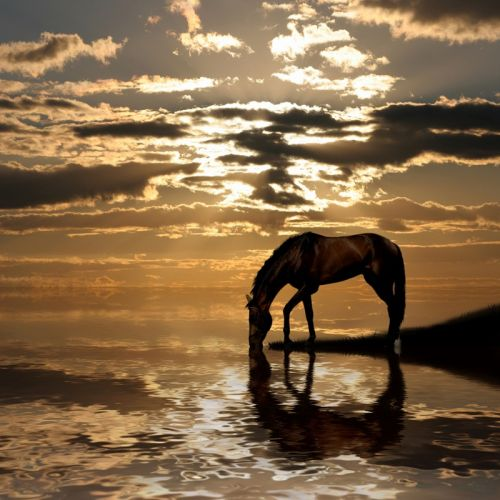 Лошадь у водопоя