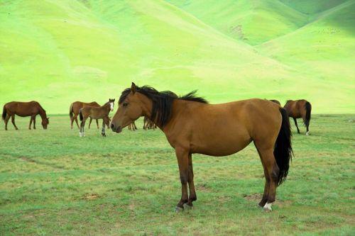 Кони на лугу