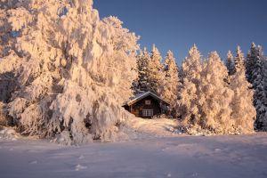 Розовая зима