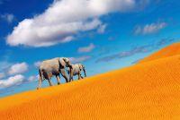 Слоны в пустыне