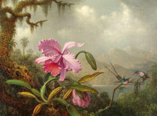 Орхидеи и колибри 2