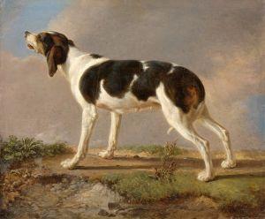 Агас Жак-Лоран Охотничья собака
