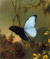 Блакитний морфо метелик