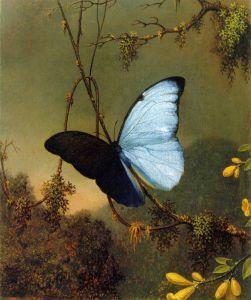 Голубая морфо бабочка