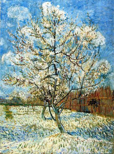 Персиковые деревья в цвету