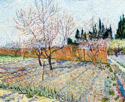 Сад с персиковыми деревьями в цвету
