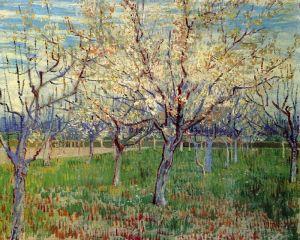 Сад с абрикосовыми деревьями в цвету