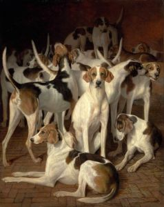 Агас Жак-Лоран Гончие собаки в питомнике
