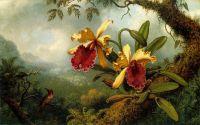 Орхідеї і колібрі