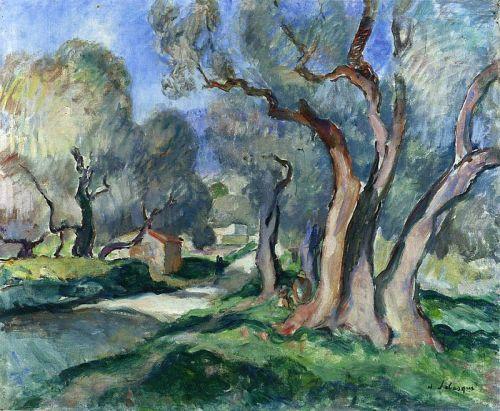 Тропа между оливковыми деревьями
