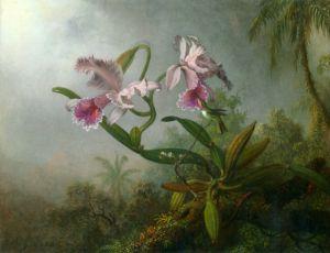 Хед Мартин Джонсон Орхидея с двумя Колибри 2
