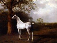 Белый конь на пастбище