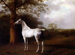 Агас Жак-Лоран Белый конь на пастбище