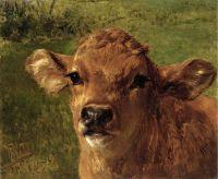 Голова теленка
