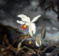 Біла бразильська орхідея