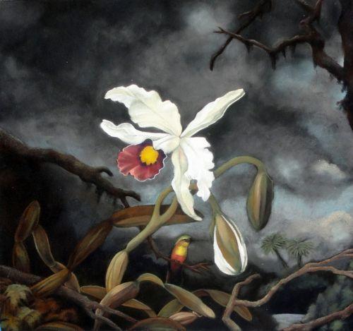 Белая бразильская орхидея