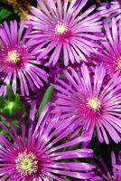 Цветы пустыни