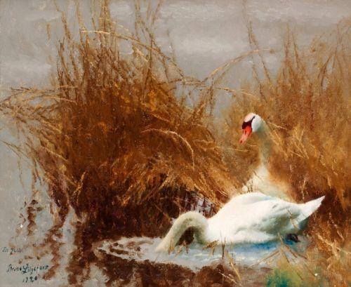 Лебеди на берегу