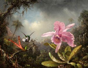 Хед Мартин Джонсон Орхидея с двумя Колибри