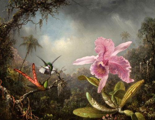 Орхидея с двумя Колибри