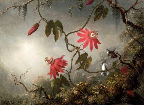 Пассифлора и колибри