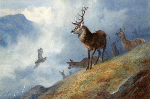 Red deer watching a golden eagle hunt