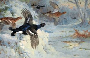 Through the snowy coverts blackgame