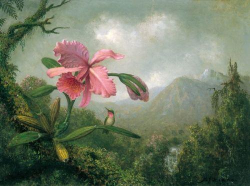 Орхидеи и колибри возле горного водопада