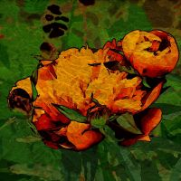Цветочная абстракция
