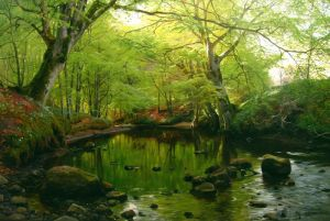 Менстед Петер Весеннее время в лесу