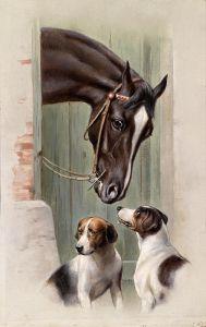 Посещение лошадиной конюшни