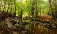 Весенний день у лесного ручейке с цветущими буками и анемонами