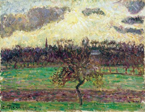 Яблуневі дерева