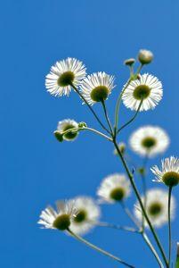 Дикие цветы и голубое небо