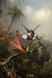 Хед Мартин Джонсон Орхидея с двумя Колибри 3