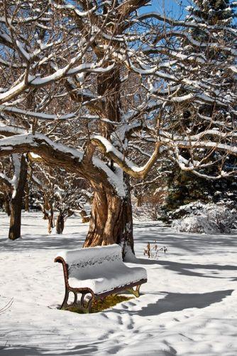 В парке зимой