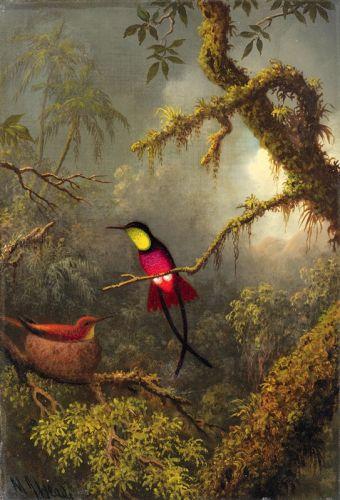 Райские птицы в гнезде