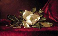 Квітка магнолії