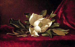 Хед Мартин Джонсон Цветок магнолии