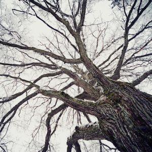 Графика ветви дерева