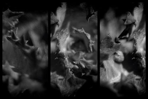 GOAN31 - зображення 1