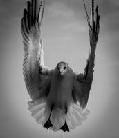 Чайка 1