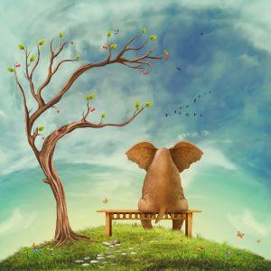 Фотокартины для интерьера Слон на скамейке