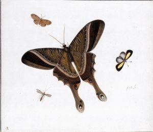 Хенстенбург Герман Три бабочки и комар