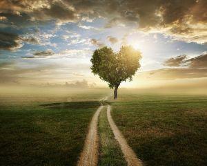 Фотокартини Дерево кохання
