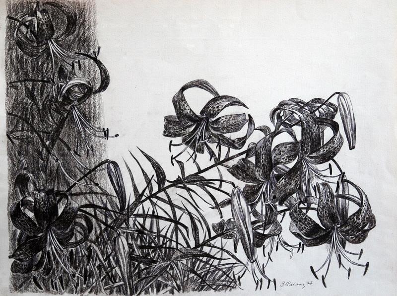 """Лилии""  бумага, цанговый карандаш Флинта Зеновий - фото 1"