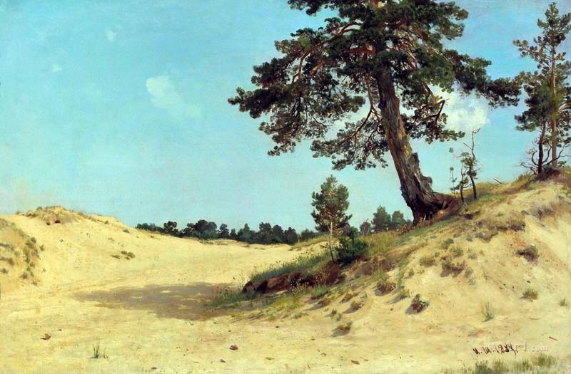 Сосна на песке  печать на холсте, натянут Шишкин Иван - фото 1