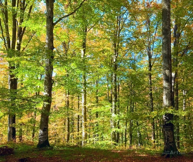 Лес  печать на холсте, натянут UkrainArt - фото 1