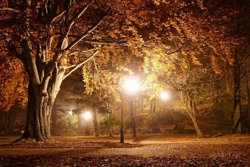 Ночной парк  печать на холсте, натянут UkrainArt - фото 1